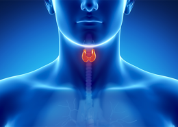 Naturally Supporting the Thyroid